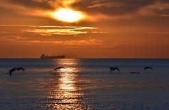 cisnes del vuelo durante salida del sol de oro sobre el mar Báltico en Gdynia, Polonia Foto de archivo libre de regalías
