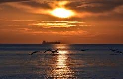 cisnes del vuelo durante salida del sol de oro sobre el mar Báltico en Gdynia, Polonia Imagen de archivo