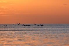 cisnes del vuelo durante salida del sol de oro sobre el mar Báltico en Gdynia, Polonia Imagenes de archivo