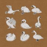 Cisnes dibujados mano fijados Imagen de archivo libre de regalías