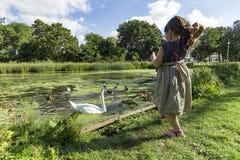 Cisnes e patos de alimentação Foto de Stock