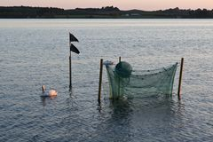 Cisnes em uma rede de pesca fotos de stock