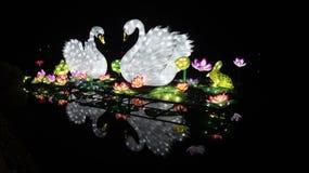 Cisnes en el lago imagen de archivo