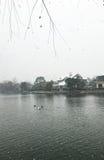 Cisnes en el lago en nieve Imagen de archivo libre de regalías