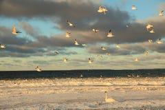 Cisnes en invierno Foto de archivo