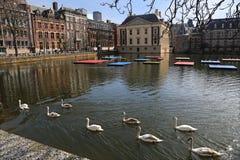 Cisnes en la celebración de Mondrian en La Haya, Holanda Imagen de archivo
