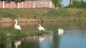 Cisnes en la ciudad metrajes