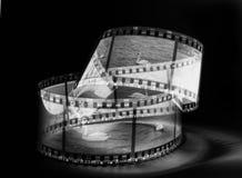 Cisnes en la película Foto de archivo libre de regalías
