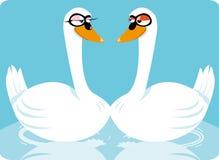 Cisnes engraçadas Fotografia de Stock