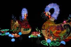 Cisnes, festival de linterna chino de Ohio, Columbus, Ohio Foto de archivo