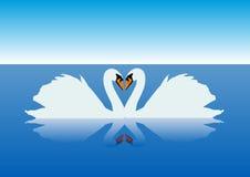 Cisnes graciosos Imagens de Stock