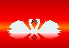 Cisnes graciosos Imagen de archivo