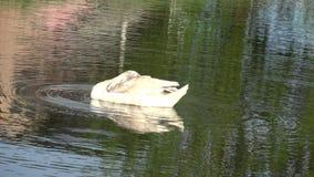 Cisnes na cidade filme