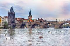 Cisnes na frente da ponte de Charles Imagens de Stock Royalty Free