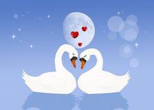 Cisnes no amor ilustração royalty free