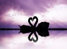 Cisnes no amor no lago no por do sol ilustração do vetor