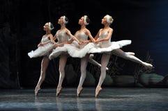 Cisnes pequenas, bailado do lago swan. fotografia de stock royalty free