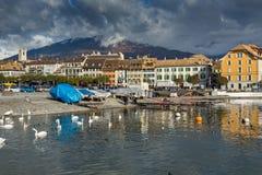 Cisnes que nadam no lago Genebra, cidade de Vevey, Suíça Fotos de Stock