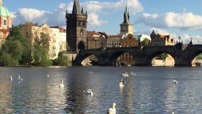 Cisnes y barco de cruceros en el río de Moldava y puente de Charles en Praga, República Checa metrajes