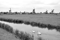 Cisnes y molinoes de viento Holanda Imágenes de archivo libres de regalías