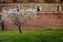 Cistercian abbotskloster av San Galgano nära Chiusdino, Tuscany, Italien Fotografering för Bildbyråer