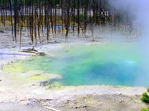 Cisterin Spring in Yellowstone National Park Royalty Free Stock Photos