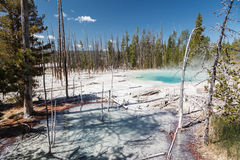 Cistern Spring with death trees in Yellowstone Royalty Free Stock Photography