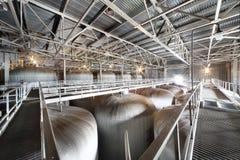 Cisternas grandes para la cerveza en la fábrica de Ochakovo Fotografía de archivo