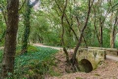 Cisza droga w lesie zdjęcie royalty free