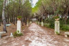 Cisza droga w lesie obraz royalty free