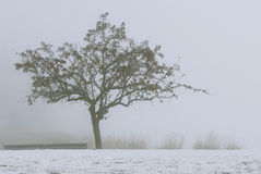 Cisza mgła Obrazy Stock