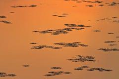 Cisza na powierzchni jezioro obrazy royalty free