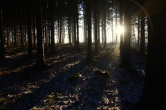 Cisza w lesie przy wschodem słońca obrazy royalty free