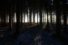 Cisza w lesie przy wschodem słońca w ten sposób pięknym zdjęcia royalty free