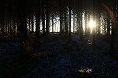 Cisza w lesie przy wschodem słońca w ten sposób uroczym obraz stock