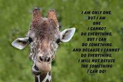 Cita de la jirafa Imágenes de archivo libres de regalías