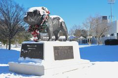 Citadel Bulldog Statue outside Johnson-Hagood Stadium. The Citadel mascot is covered in a fresh batch of snow as a rare winter storm dropped six inches of snow Royalty Free Stock Photos