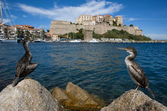The Citadel of Calvi Royalty Free Stock Photography