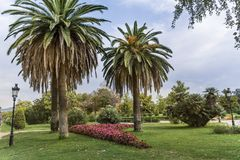 Palm trees and flowers in  the Ciutadella Park,Barcelona Royalty Free Stock Images