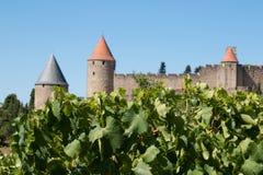 Citadela de Carcassonne com os vinhedos no primeiro plano Fotos de Stock Royalty Free