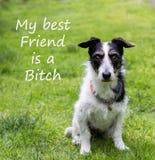 Citações com cão bonito Meu melhor amigo é uma cadela Fotos de Stock