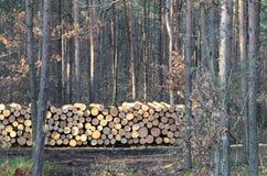 cięte drzewa Zdjęcie Royalty Free