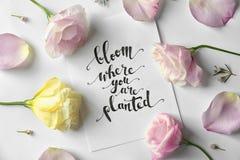 Cite la floración del ` donde usted está ` plantado escrito en el papel con los pétalos y flores imagen de archivo
