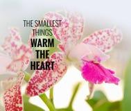 Citeer de kleinste dingen verwarmen het hart Royalty-vrije Stock Fotografie