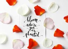 Citez la fleur de ` où vous êtes ` planté écrit sur le papier avec des pétales sur le fond blanc Vue supérieure Photo stock
