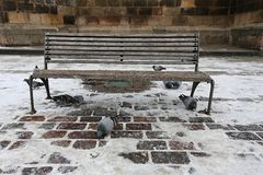 Cities pigeons at the bench in the square stock image