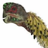 Citipati Dinosaur Head Royalty Free Stock Photography