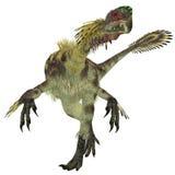 Citipati Male Dinosaur Stock Image