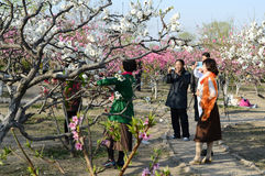 Citizens taking photos in peach blossom Royalty Free Stock Photo