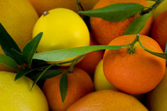 Citric close up. Different citric fruits close up Royalty Free Stock Image